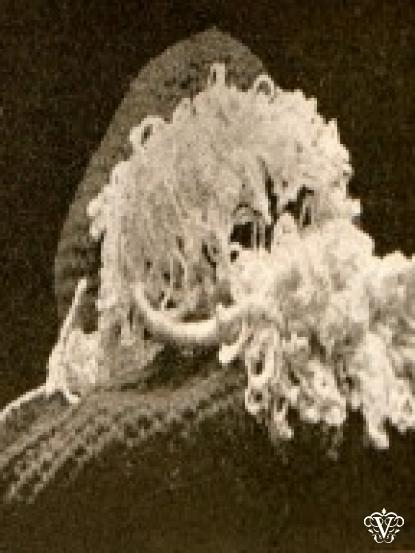 Vintage Very Old Ostrich Feather Crochet Pattern