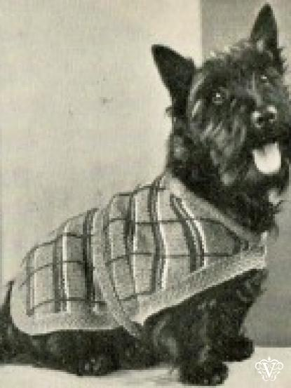 1930s Terrier Dog Coat Knitting Pattern Quick To Knit